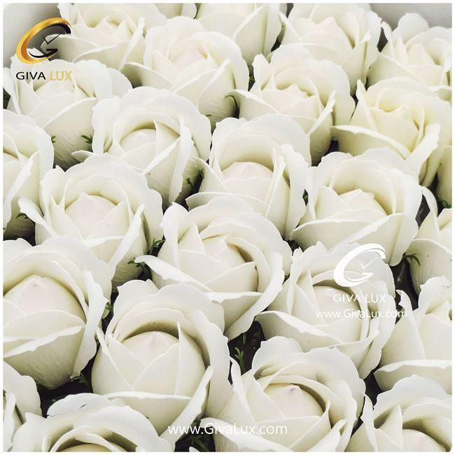 گل رز معطر سفید